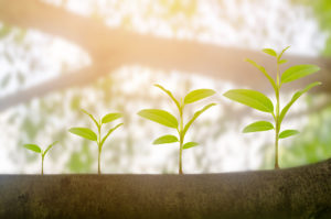 opportunties for growth